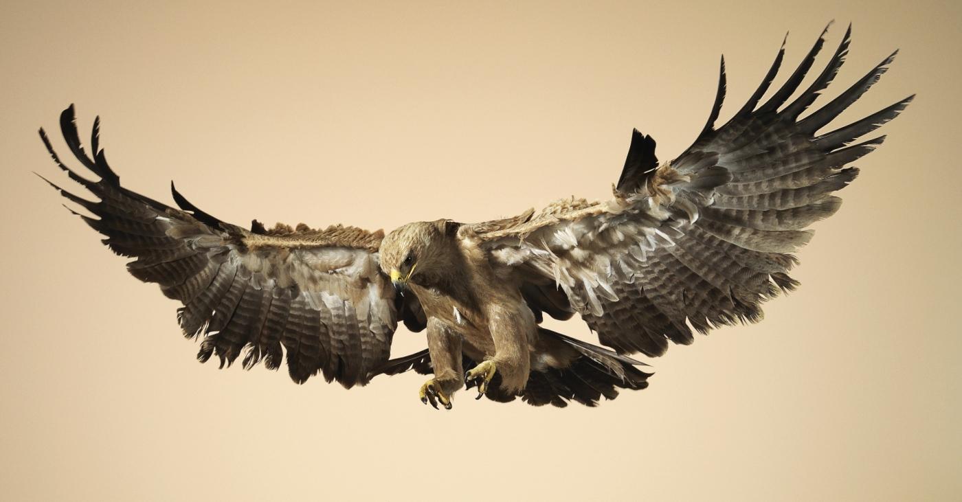 Dominic Marley Flight